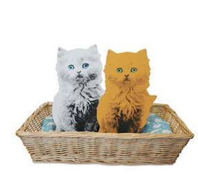 flat pets kittens